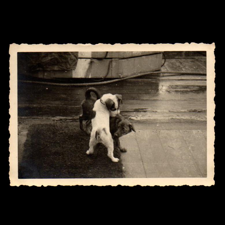 Wiltonwerft Schiedam / Rotterdam 1941 Nelli und Bobbi [Kriegsmarine]